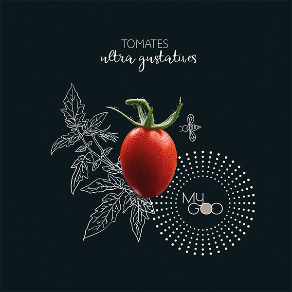 Agence de communication A Tribu Le Mans 72 Sarthe Pays-de-la-Loire — My GOO catalogue tomates ultra gustatives